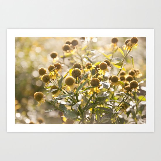 Flowers in Mt. Rogers, Virginia Art Print