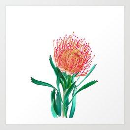 Pincushion protea flower Art Print