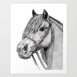 Shetland Pony Portrait Art Print