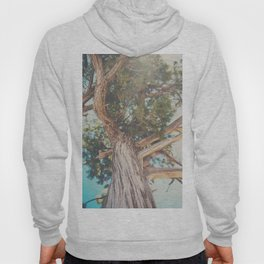 looking up through the leaves of the Juniper Tree ... Hoody