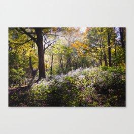 Montreal Autumn Canvas Print