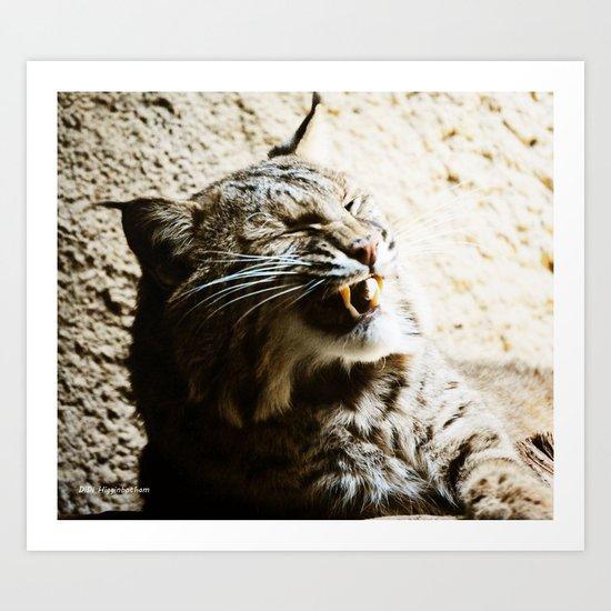 Catterwalling Art Print