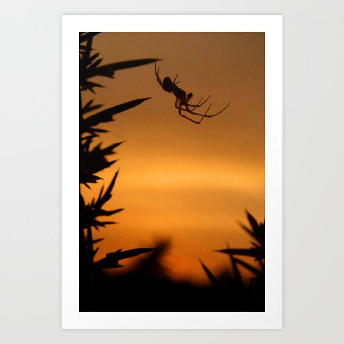 Sunset Spider Art Print