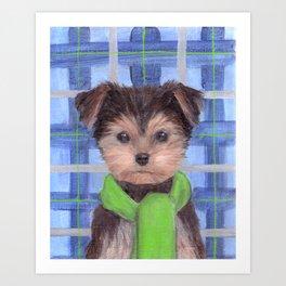 Yorkie Poo in Scarf Art Print
