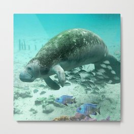 Large  Manatee Metal Print