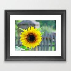 Sunflower with bee Framed Art Print
