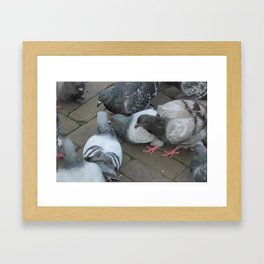 Pigeon Party! Framed Art Print