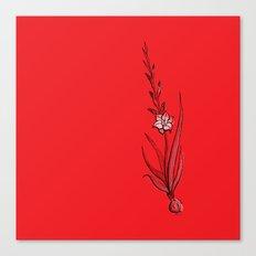 Gladiolus Flower Canvas Print