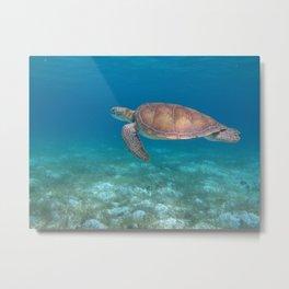 Turtle cove green turtle Metal Print