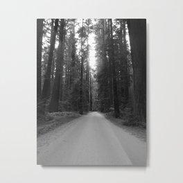 Road to Founders Grove Metal Print