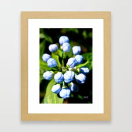 Blue Ball Framed Art Print