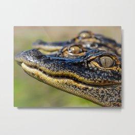 Baby Alligators Metal Print