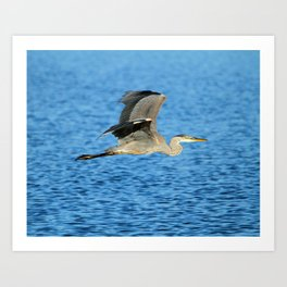 Skimming the lake Art Print