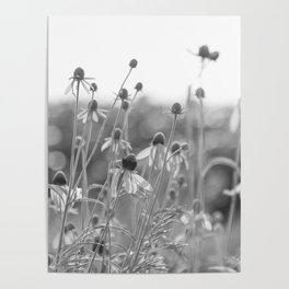 Wildflowers in the country Poster