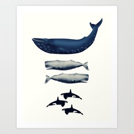 Whale Counting 123  Art Print