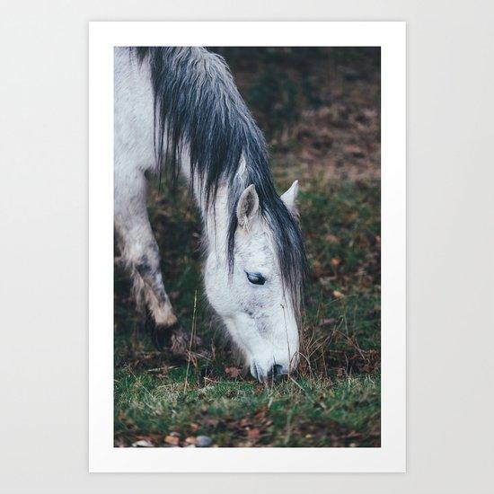 Gentle horse Art Print