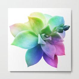 rainbow succulent juicy plant botanical nature Metal Print