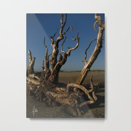 Driftwood - Color Metal Print
