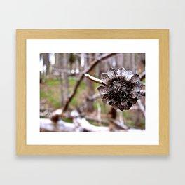 Pine Flower Framed Art Print