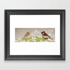 House Sparrows Framed Art Print