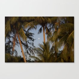 palm night in Thailand Canvas Print