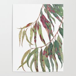 A touch of red - watercolour of eucalyptus branch Poster