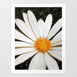 White and Curly #3 Art Print