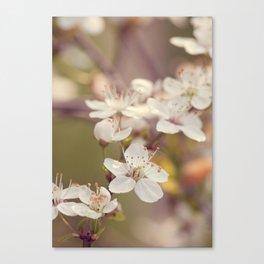Blooming spring tree Canvas Print