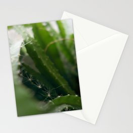 Pitahaya Stationery Cards