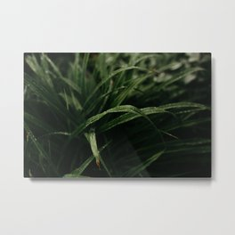 Rain on Grass Metal Print