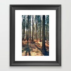 Into the trees... Framed Art Print