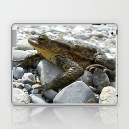 Bufo Bufo Toad Lounging On Stones Laptop & iPad Skin