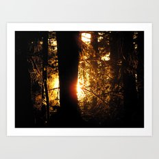 Sunset Through the Woods Art Print
