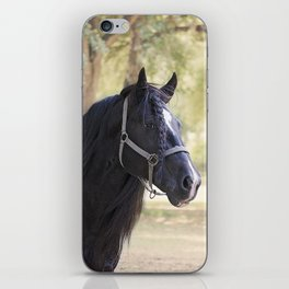 Stunning Gypsy Vanner in Color iPhone Skin
