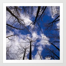 Circle of Trees and Blue Skys Art Print