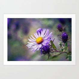 Purple Aster Flower Art Print