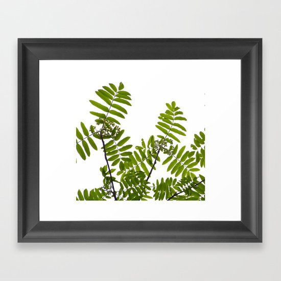 Green Rowan Leaves White Background #decor #society6 #buyart by pivivikstrm