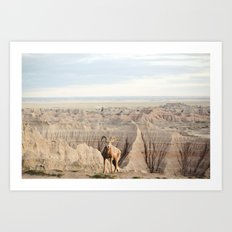Badland Bighorn Sheep Art Print