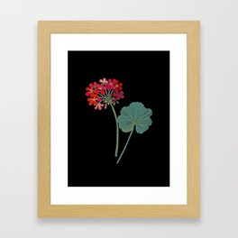 Geranium Inquinans Mary Delany Delicate Paper Flower Collage Black Background Floral Botanical Framed Art Print