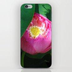 peeking through iPhone & iPod Skin