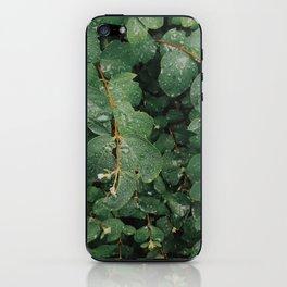Spring Dew Drops iPhone Skin