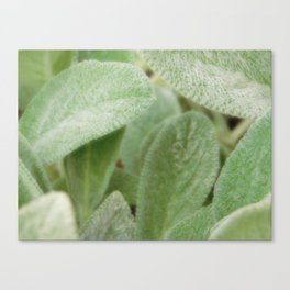 Wooly Canvas Print
