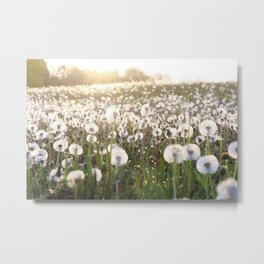 Field Full of Wishes Metal Print