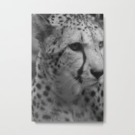 Cheetah Black & White Metal Print
