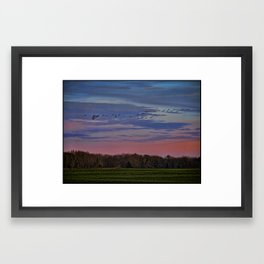 Geese Flying Over The Turf Farm Framed Art Print