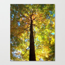 Colorful Heights Canvas Print
