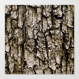 Tree Bark Canvas Print