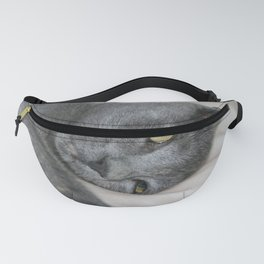 Russian Blue Kitten Relaxed On A Bed Fanny Pack