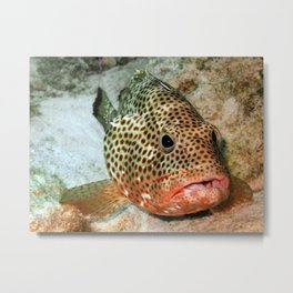 Coral Grouper Being Cleaned Metal Print