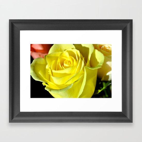 friendship rose Framed Art Print